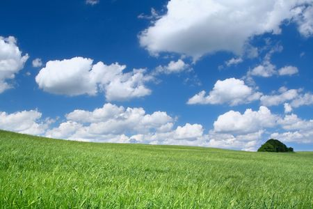 summer field with cumulus clouds, focus set in foreground