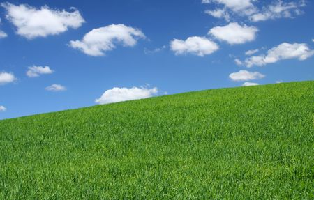 horrizon: summer wild field with cumulus clouds, focus set in foreground Stock Photo