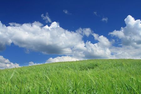 horrizon: summer wild field with cumulus clouds