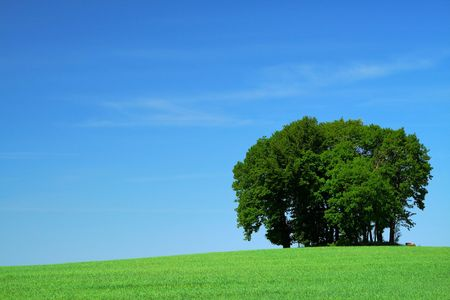 vivid green grass field and a bunch of trees Stock Photo - 3126073