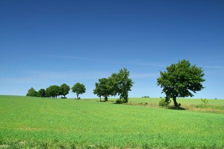 tree line on the edge of meadow Stock Photo - 3126076