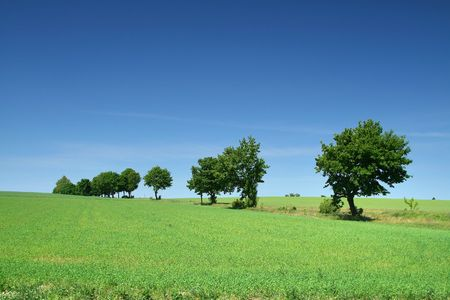 tree line on the edge of meadow Stock Photo - 3126076