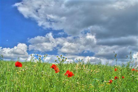 wild summer meadow against dark cumulus clouds  photo
