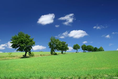 blissful summer landscape with tree line and cumulus clouds Stock Photo - 3142250