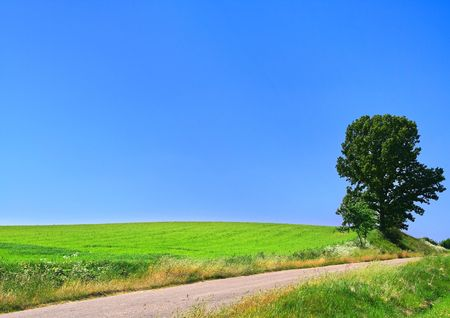 picturesque country road and lone tree against cloudless sky photo