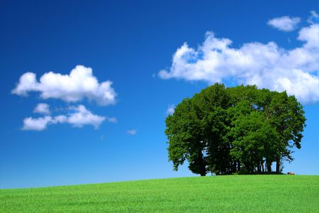 vivid green grass field and a bunch of trees Stock Photo - 3386330