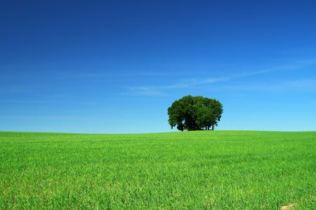 cloudless: green grass field and a bunch of trees Stock Photo