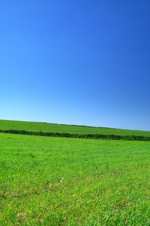 filed: summer country view with cloudless sky