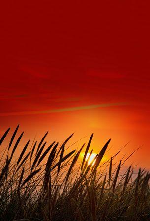 blades of grass against summer sunset photo