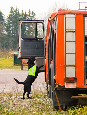 black dog working with rescue team