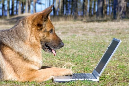 Germany Sheep-dog laying on the grass with laptop Stock Photo