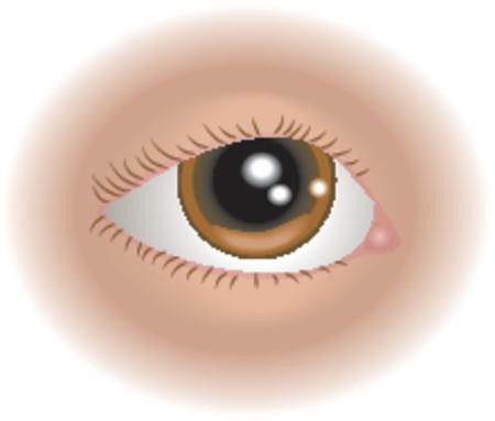 Partes del cuerpo ojo. Un ejemplo de un ojo humano, no utilizan mallas  Vectores