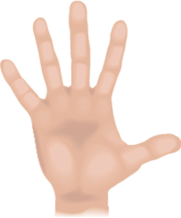 sense: Body parts hand. An illustration of a human hand, no meshes used Illustration
