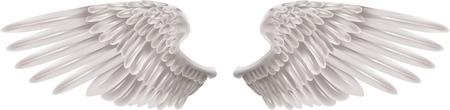 angelic: Ilustraci�n de un par de extensas alas hermoso blanco Vectores