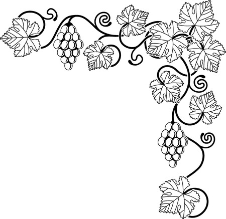 relating: A grape vine corner background design element ideal for any design relating to wine or with any Mediterranean theme.