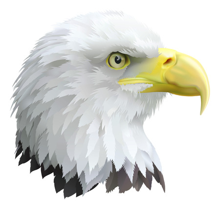flying eagle: Illustration of a eagles head in profile.