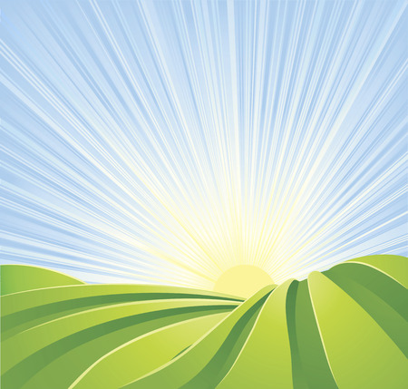 paddy field: Illustration of idyllic green fields with sunshine rays and blue sky. A perfect landscape scene.