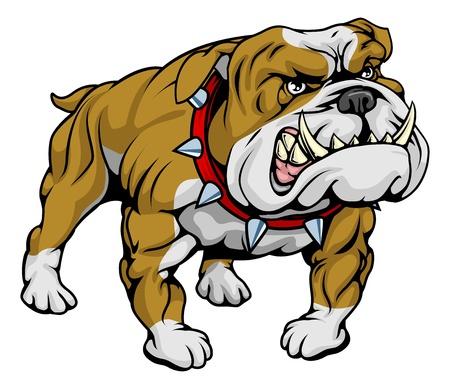 muscly: A cartoon very hard looking bulldog character.  Illustration