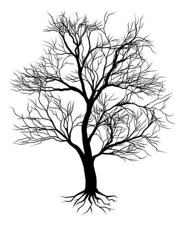 bomen zwart wit: Een hand getrokken oude boom silhouet illustratie
