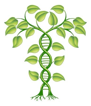 генетика: Концепция ДНК растений, может обратиться к альтернативной медицине, изменение культуры гена. Иллюстрация