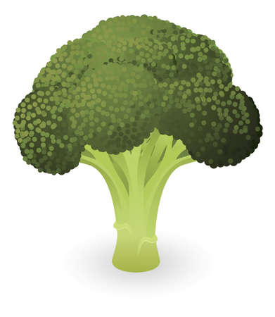 brassica: Illustration of a fresh green piece of broccoli