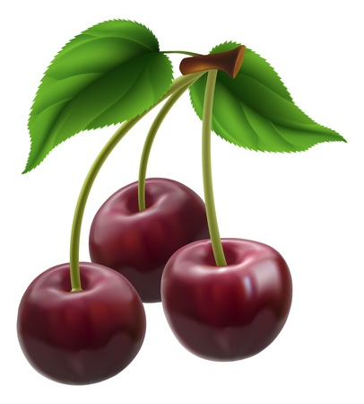Illustration of a bunch of three cherries Vector