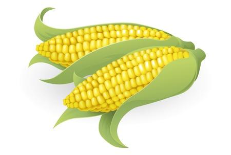 planta de maiz: Una ilustración de un maíz dulce sabor fresco