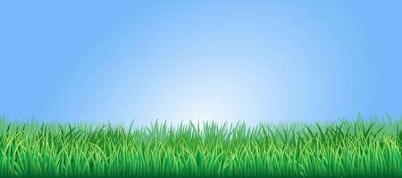 himmelsblå: Grönt gräs fält eller gräsmattan under en klarblå himmel
