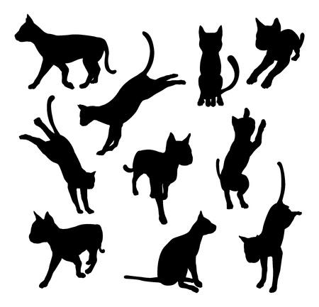 silueta gato negro: Un conjunto de siluetas del gato del animal doméstico incluyendo el gato jugando, saltando y caminando