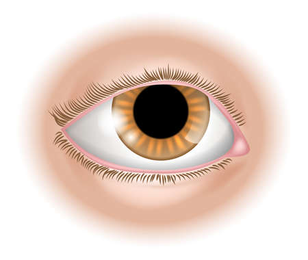 humans: An illustration of a human eye body part, could represent sight in the five senses Illustration