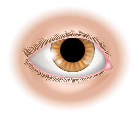 partes del cuerpo humano: Una ilustración de una parte del cuerpo ojo humano, podría representar la vista en los cinco sentidos Vectores