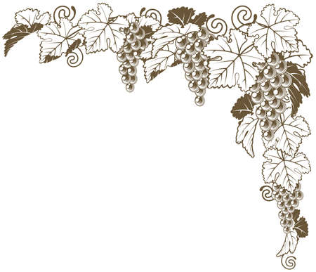 creepers: A grape vine border corner ornament design element of grape bunches and leaves in vintage style, wine label concept