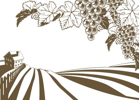 xilografia: Viñedo vid ilustración granja con colinas plantadas y granja. Racimos de uva y la vid en primer plano. En el estilo retro vintage. Vectores