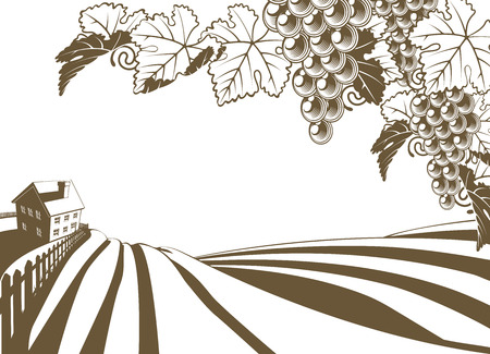 Vineyard grapevine farm illustration with rolling planted hills and farmhouse. Grape bunches and vine in foreground. In vintage retro style.