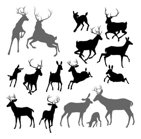 Silhouette Deer including fawn, doe bucks and stag.  Vector