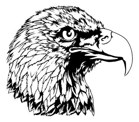 An illustration of an imposing bald eagles head Vector