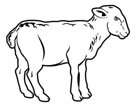 An illustration of a lamb, could be a food label or menu icon for lamb Vector