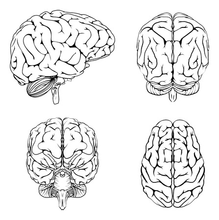 A diagram of a brain from the top side front and back in outline