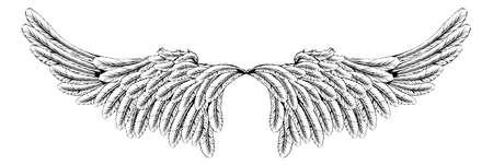 ali angelo: Un esempio di un paio di ali come angelo o ali d'aquila Vettoriali