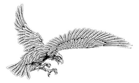 etched: Original eagle illustration of an eagle swooping in for the kill in a vintage style