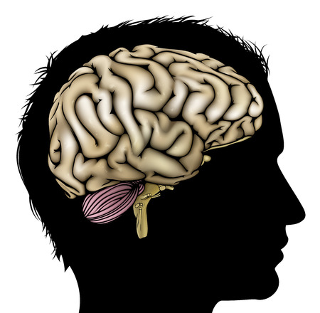 behavioral: A mans head in silhouette with brain. Concept for mental, psychological, brain development, learning and education or other medical theme