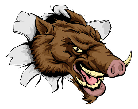 boar: A cartoon mean Boar sports mascot bursting out of the wall or background Illustration