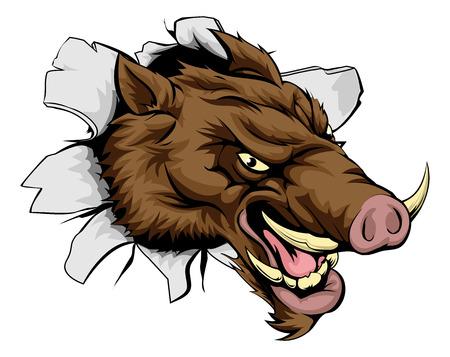 wildschwein: Eine Karikatur bedeuten Boar Sportmaskottchen platzt aus der Wand oder Hintergrund