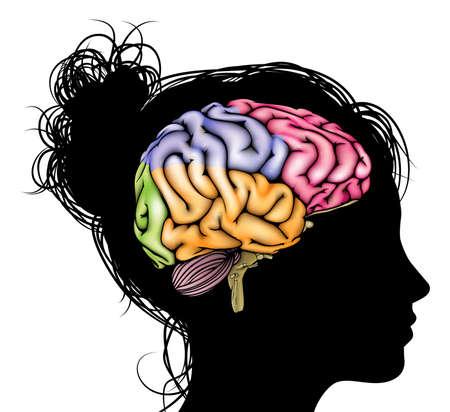 denkender mensch: Ein Kopf der Frau in der Silhouette mit einer geschnittenen Gehirns. Konzept f�r mentale, psychologische, die Entwicklung des Gehirns, Lernen und Bildung oder anderen medizinischen Thema Illustration