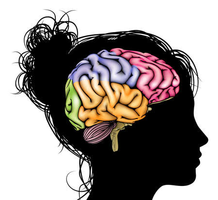 A womans head in silhouette with a sectioned brain. Concept for mental, psychological, brain development, learning and education or other medical theme Illustration