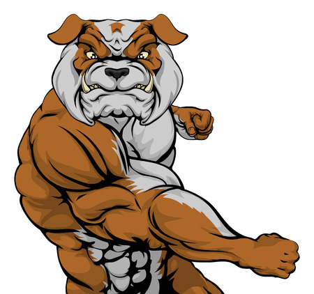 Tough mean muscular bulldog character or sports mascot in a fight punching with fist Vector