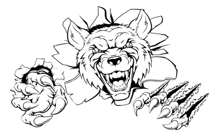 ferocious: An illustration of a tough looking wolf animal sports mascot or character breaking through
