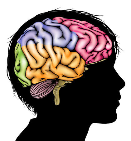 psicologia infantil: A la cabeza del niño en silueta con un cerebro seccionado