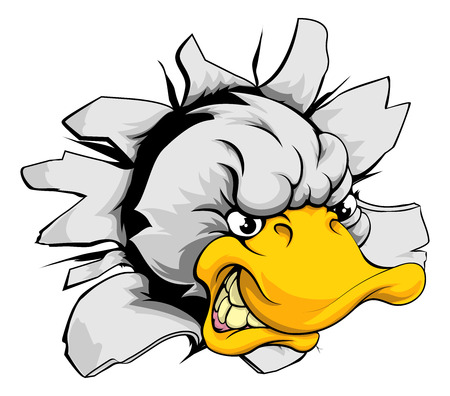 white duck: A mean looking duck animal mascot breaking through a wall