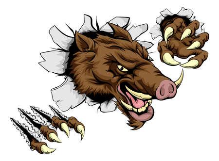 sanglier: Un personnage mascotte sanglier animal effrayant rupture à travers la paroi avec des griffes